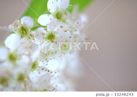 白い花 33246243