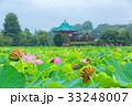 上野恩賜公園 不忍池 花の写真 33248007