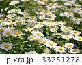白い花 33251278