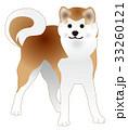 秋田犬 33260121