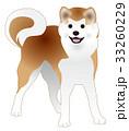 秋田犬 33260229