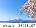春の青空に恵まれた桜と富士山 33263167