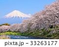 春の青空と桜並木の風景 そして富士山 33263177