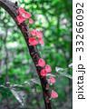 菌類 真菌 きのこの写真 33266092