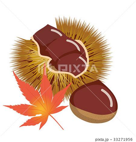 秋の味覚 栗のイラストchestnut Illustrationのイラスト素材 33271956