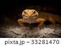 は虫類 ハ虫類 レプタイルの写真 33281470