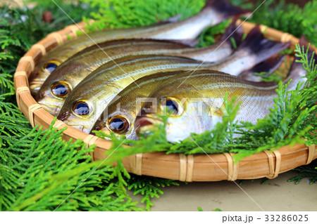 イサキ(伊佐木、伊佐幾、鶏魚) 33286025