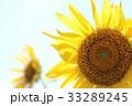 向日葵 花 夏の写真 33289245