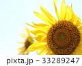 向日葵 花 夏の写真 33289247