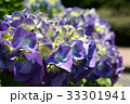 紫陽花 33301941