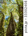 森の大木1 33302408