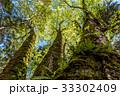 森の大木2 33302409