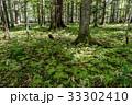 緑の絨毯 33302410