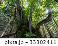 森の大木3 33302411