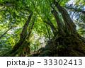 森の大木5 33302413
