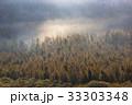 初秋の原生林と雲海3 33303348