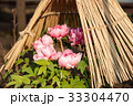 牡丹 花 冬牡丹の写真 33304470