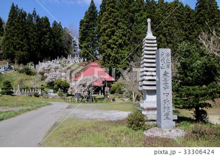 赤沼無量寺のしだれ桜(小野町)の写真素材 [33306424] - PIXTA