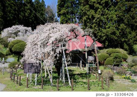 赤沼無量寺のしだれ桜(小野町)の写真素材 [33306426] - PIXTA