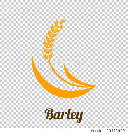 Wheat barley spike yellow isolated 33313906