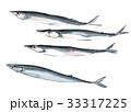 秋刀魚 魚 青魚のイラスト 33317225