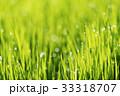 草 背景 グリーンの写真 33318707