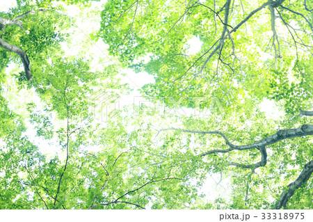森の風景 33318975
