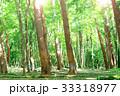 森の風景 33318977