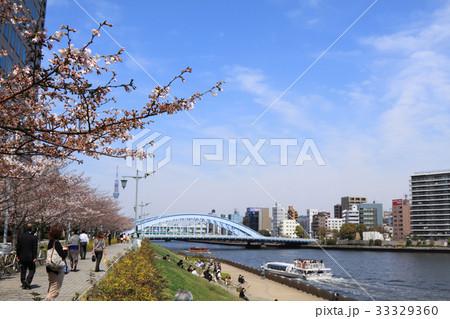 桜 開花 隅田川 永代橋 33329360