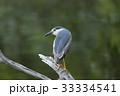 五位鷺 野鳥 鳥類の写真 33334541