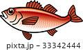 アカムツ ノドグロ 魚のイラスト 33342444