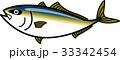 ブリ 魚 ベクターのイラスト 33342454