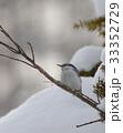 雪 冬 鳥の写真 33352729