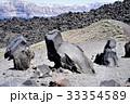 サントリーニの火山島の変わった岩たち 33354589
