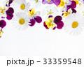 フラワー 花 パンジーの写真 33359548
