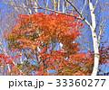 西湖野鳥の森公園の紅葉-27809 33360277