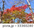 西湖野鳥の森公園の紅葉-27812 33360280