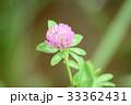植物 花 紫詰草の写真 33362431