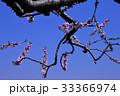 植物 花 自然の写真 33366974