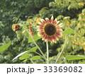 色々な花の咲くヒマワリモネパレットの赤と黄色い花 33369082