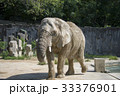 アフリカゾウ 33376901