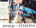 チヌ釣り 釣り チヌの写真 33382654
