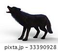 狼 イヌ科 動物のイラスト 33390928