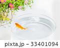 金魚 魚 ポーチラカの写真 33401094