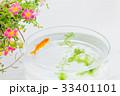金魚 魚 ポーチラカの写真 33401101