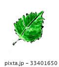 大葉 しそ 食材のイラスト 33401650