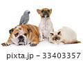 group of pet 33403357