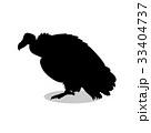 Vulture bird black silhouette animal 33404737