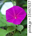 花 植物 咲くの写真 33407037