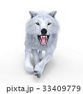 狼 イヌ科 動物のイラスト 33409779